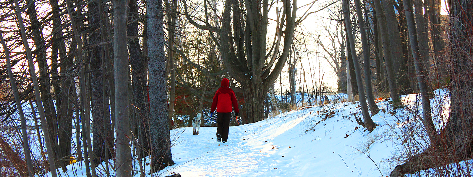 Person walking dog on snowy path